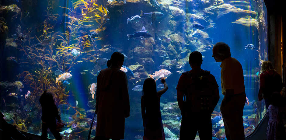 Silhouetted guests look at fish in California Coast exhibit