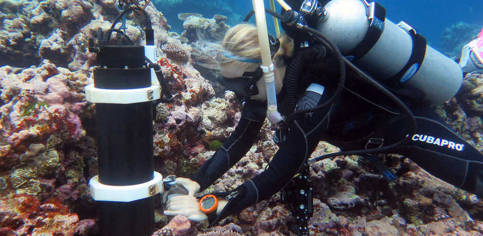 Academy coral reef scientist Rebecca Albright studies a reef in Pohnpei