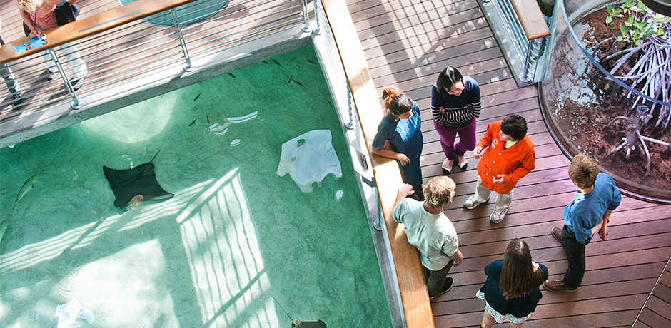 Aerial shot of Academy docent and guests on walkway over Mangrove Lagoon