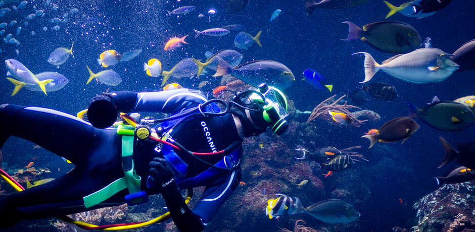 Volunteer scuba diver swims in the Philippine Coral Reef exhibit among colorful fish