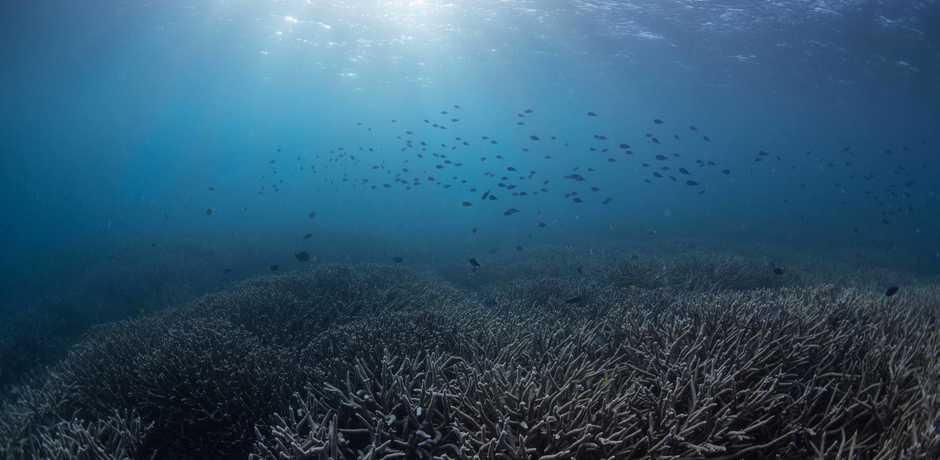 A bleached coral reef in a sun-dappled, moody tropical blue ocean