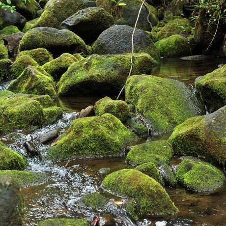 Bryophytes of Kauai