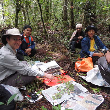 Botany staff in the field on the 2014 Biodiversity Expedition