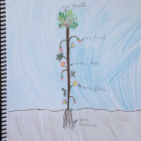 plant sketch