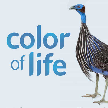 Color of Life Educator Guide Cover