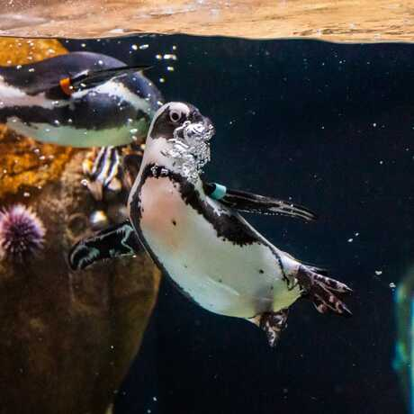 Penguin Exhibit 2021