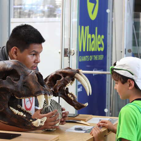 An Academy intern interacts with a kid at the fossils cart