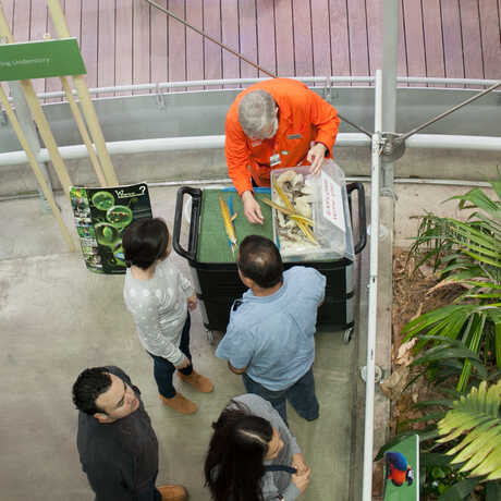Docent cart in the rainforest dome