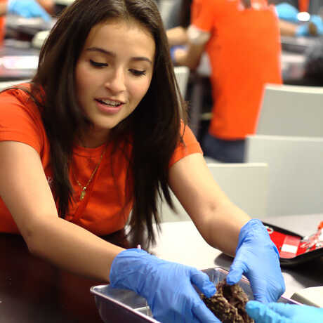 An intern dissecting an animal.