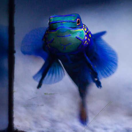 Aquarium behind-the-scenes tour