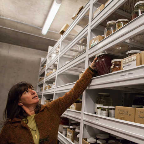 A woman examining a specimen in our collections.
