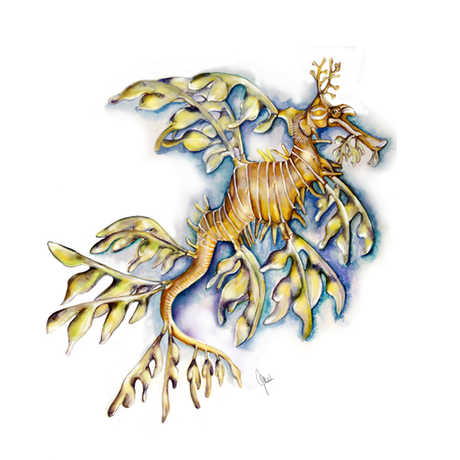 Illustration of a leafy seadragon.