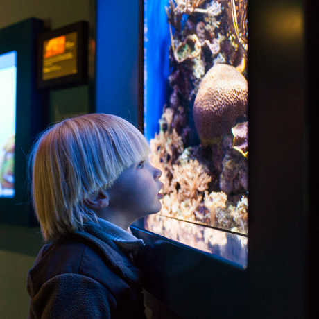 A child looks at an animal in the Steinhart Aquarium.