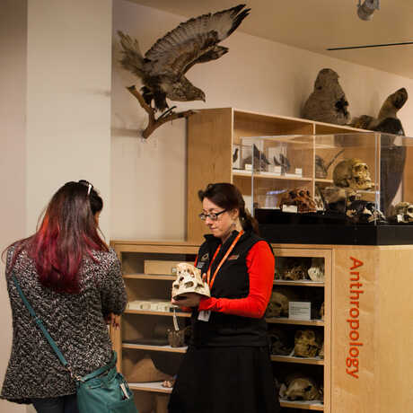 An Academy naturalist talks to a visitor about a specimen.