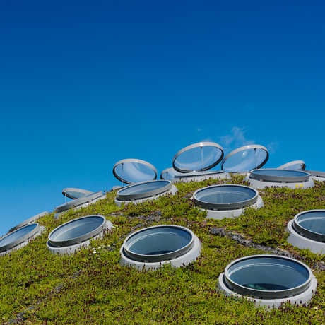 The automated ventilation system on the Living Roof lets air flow through the Academy.