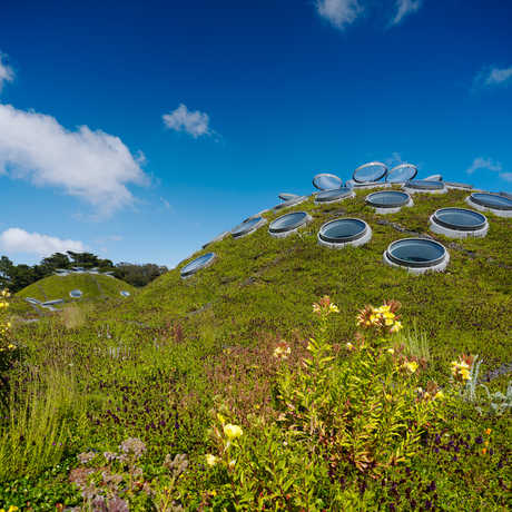 View of the Living Roof with wildflowers
