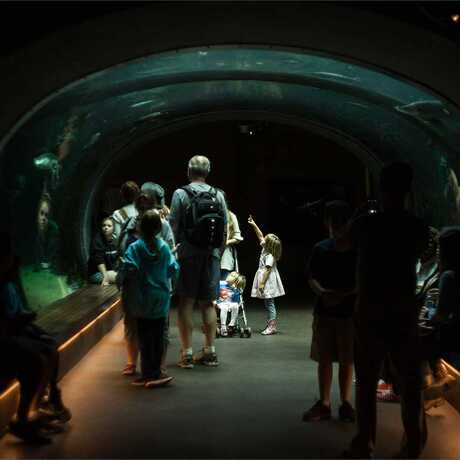 A girl gazes up in wonder at a giant Arapaima in the Academy's Flooded Forest tunnel exhibit