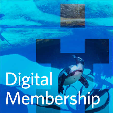 Web hero image for Digital Membership with underwater photo of penguins
