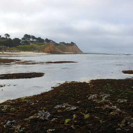 Sunset tidepooling on California coast