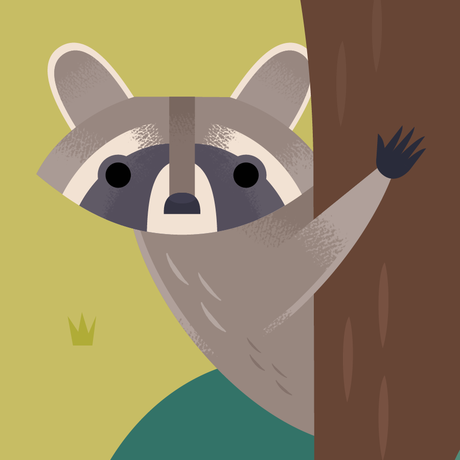 Cartoon raccoon peeking from behind a tree