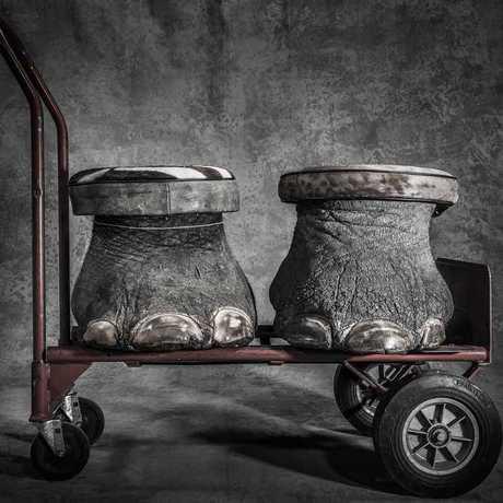 Shocking image of elephant feet turned into footstools, by  Britta Jaschinski
