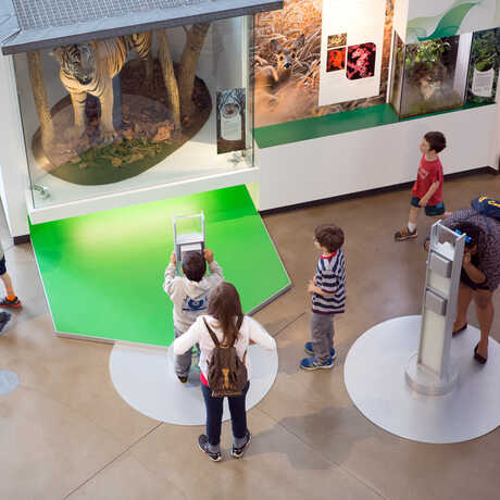 Guests exploring Color of Life exhibit and tiger specimen at California Academy of Sciences