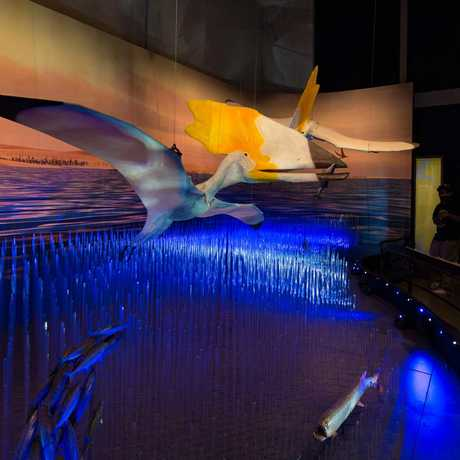 A life size diorama depicts two giant pterosaurs flying over a prehistoric ocean