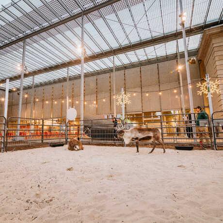 View of the reindeer habitat in the Academy's East Garden