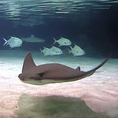 Shark webcam