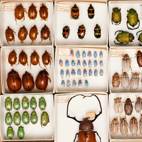 Colorful insect specimens in the Academy's scientific collections