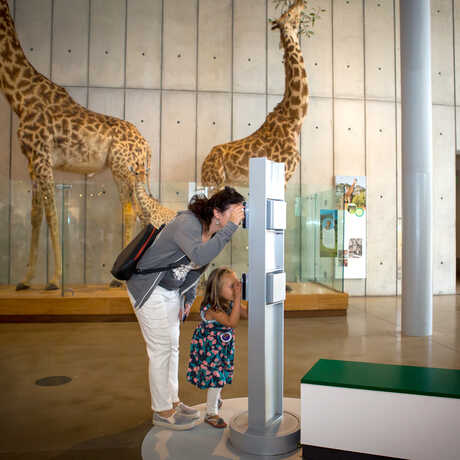 A mother and daughter use an exhibit viewer designed for guests of different heights