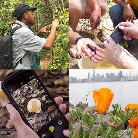 City Nature Challenge participants