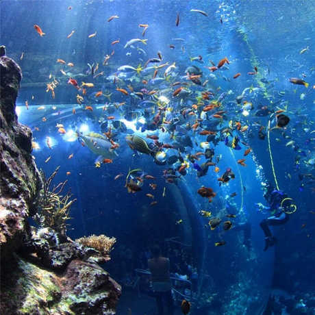Philippine Coral Reef exhibit