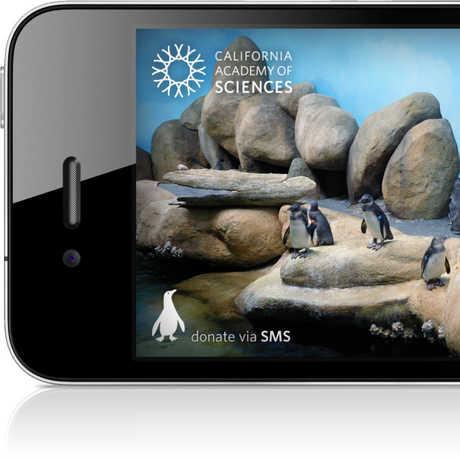 Picture of Pocket Penguins app layout.
