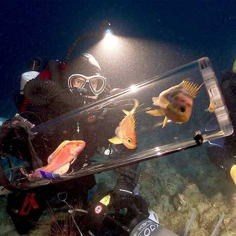 Bart Shepherd with twilight zone fish
