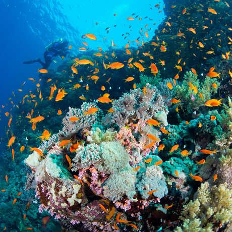 Luiz diving in Red Sea