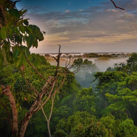 3D Earth: Rainforests