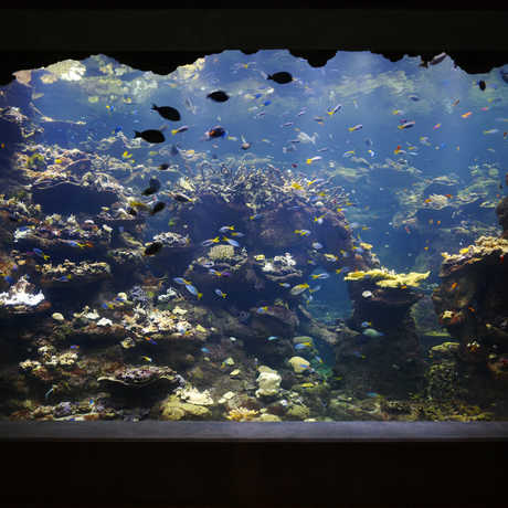 Coral Reef Window; Photo: Tim Griffith