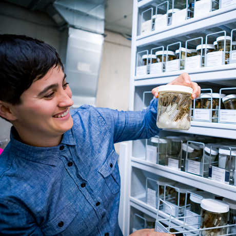 Dr. Lauren Esposito in collections