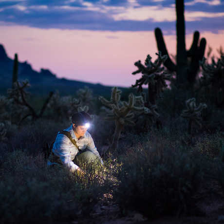Dr. Lauren Esposito searching for scorpions
