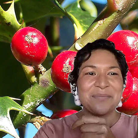 Curator Nat Nagalingum badly photoshopped onto a photo of holly berries
