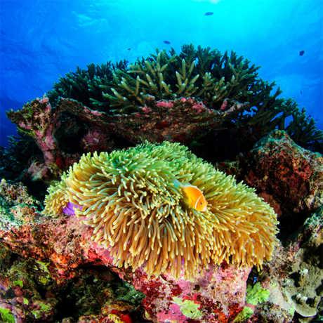 coral reef california academy of sciences