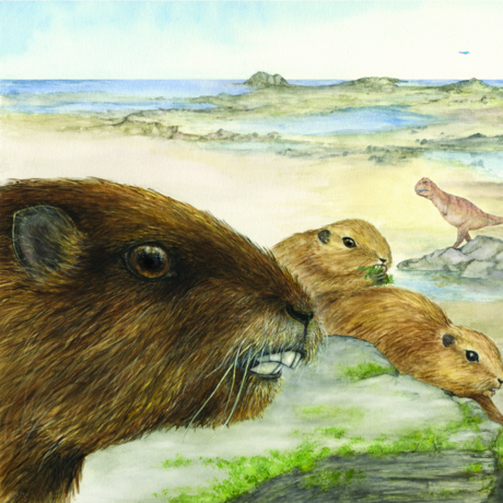 Early mammal, Vintana
