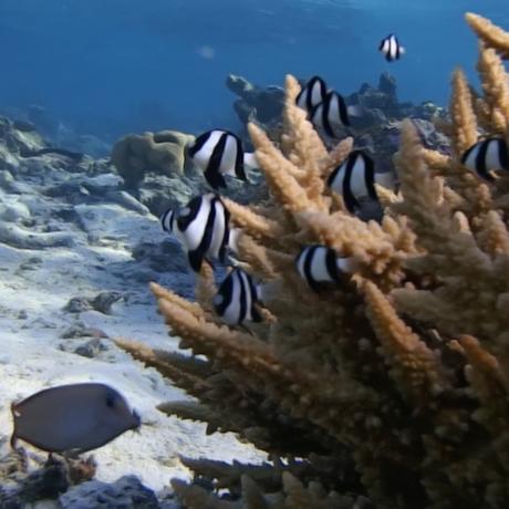 Coral reef, American Samoa