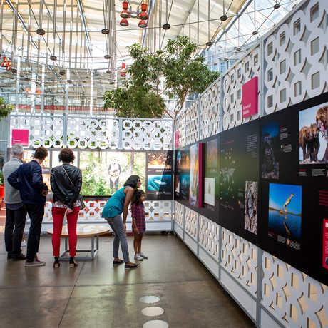 BigPicture exhibit