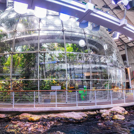 Exterior view of rainforest glass dome with California Coast habitat in foreground