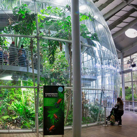 Glass enclosed indoor rainforest at the Academy