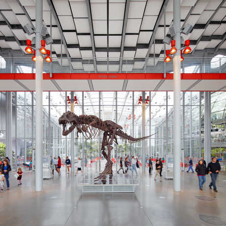 T. rex in Main Lobby