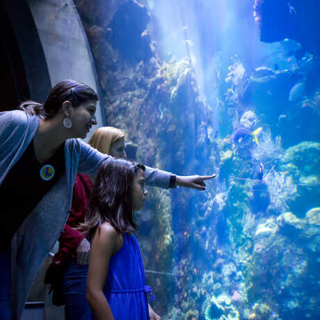 Guests marvel at the enormous Philippine Coral Reef exhibit