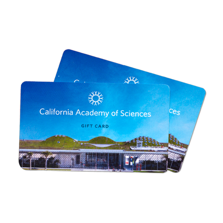 New Academy gift cards